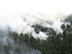 View of aerial burn