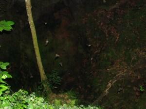 Emergence of southeastern bats.