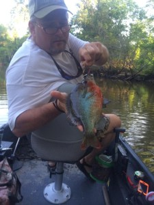 "Ben Spears of Metter caught this ""rooster"" redbreast on a crawfish Satilla Spin on Tuesday while fishing the Ogeechee River near Midville."