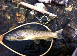 Jeff Durniak recently returned from Montana, where he caught this brown trout.