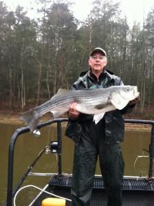 25-pound Hartwell striper.