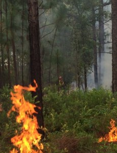 Prescribed fires at the sandhills tract have produced a dynamic shift in the natural communities and an increase in floristic diversity, writes DNR's Shan Cammack.