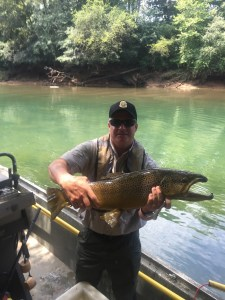 11 pound Chattahoochee brown trout