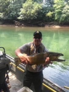 11 pound Chattahoochee brown trout