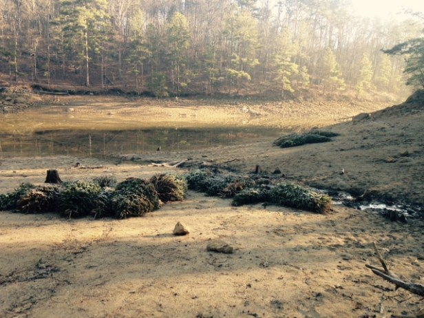 fish attractor Allatoona Ridenour trees Feb 2016