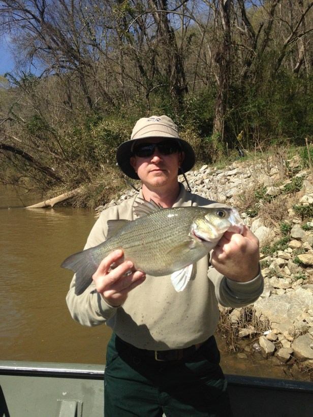 bass white female sample Bowen Coosa 3-16-16 resized