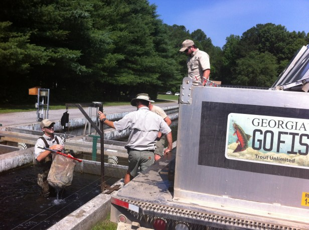 trout stocking Buford load truck June 2016