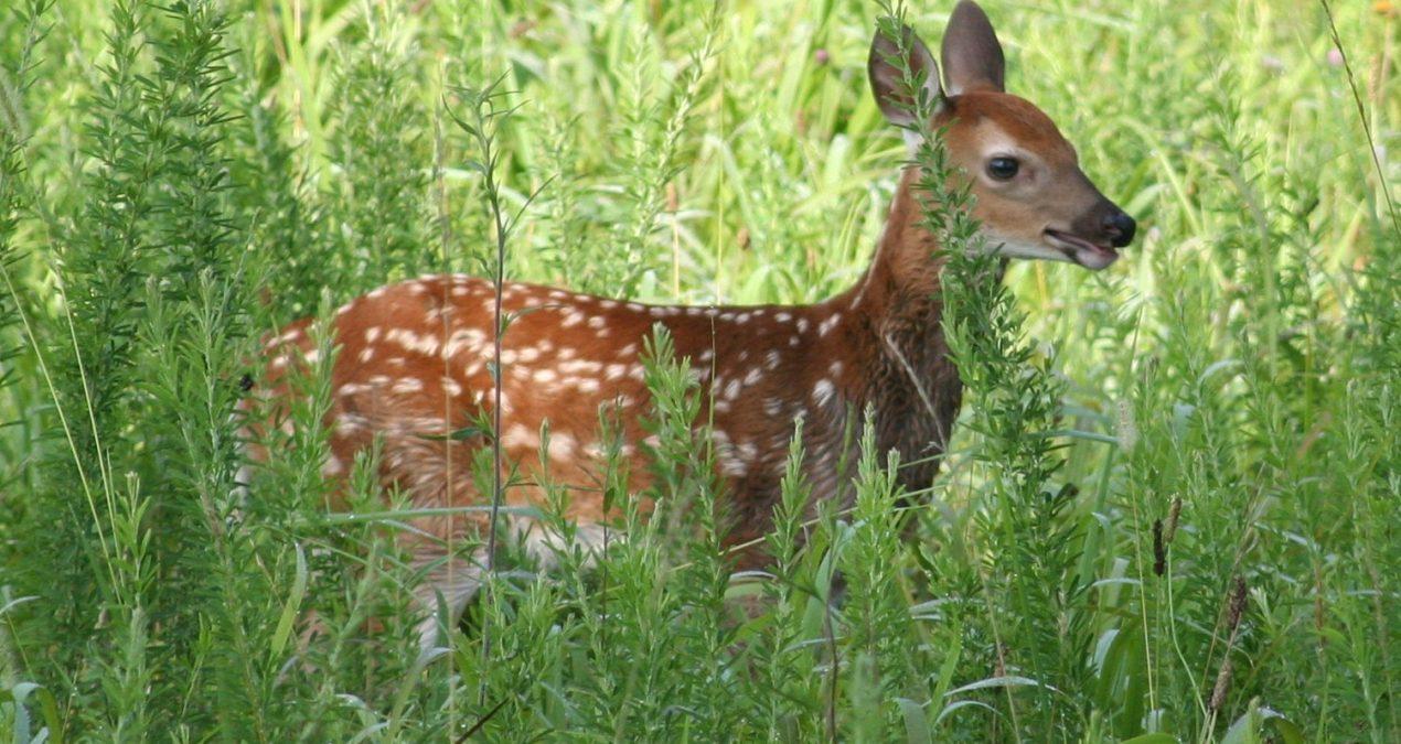 Deer Movement and Habitat