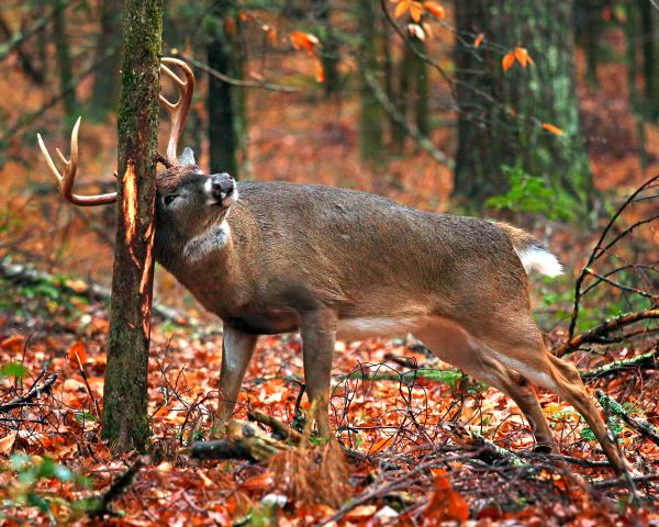 So you think you know how to deer hunt?              5 tips that will ensure a more successful  season