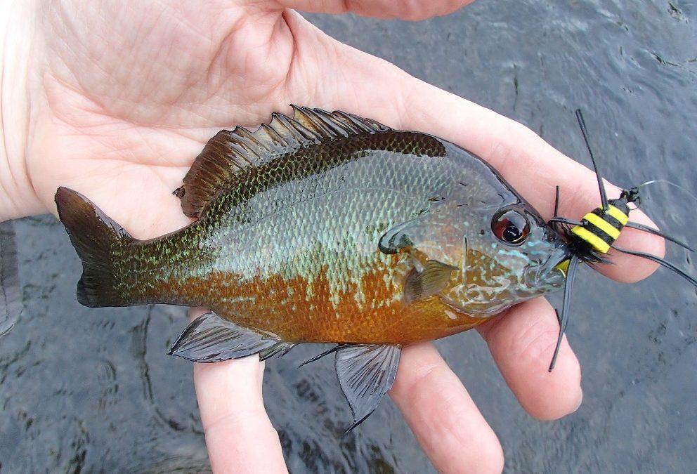 Georgia Fishing Report: August 18, 2017