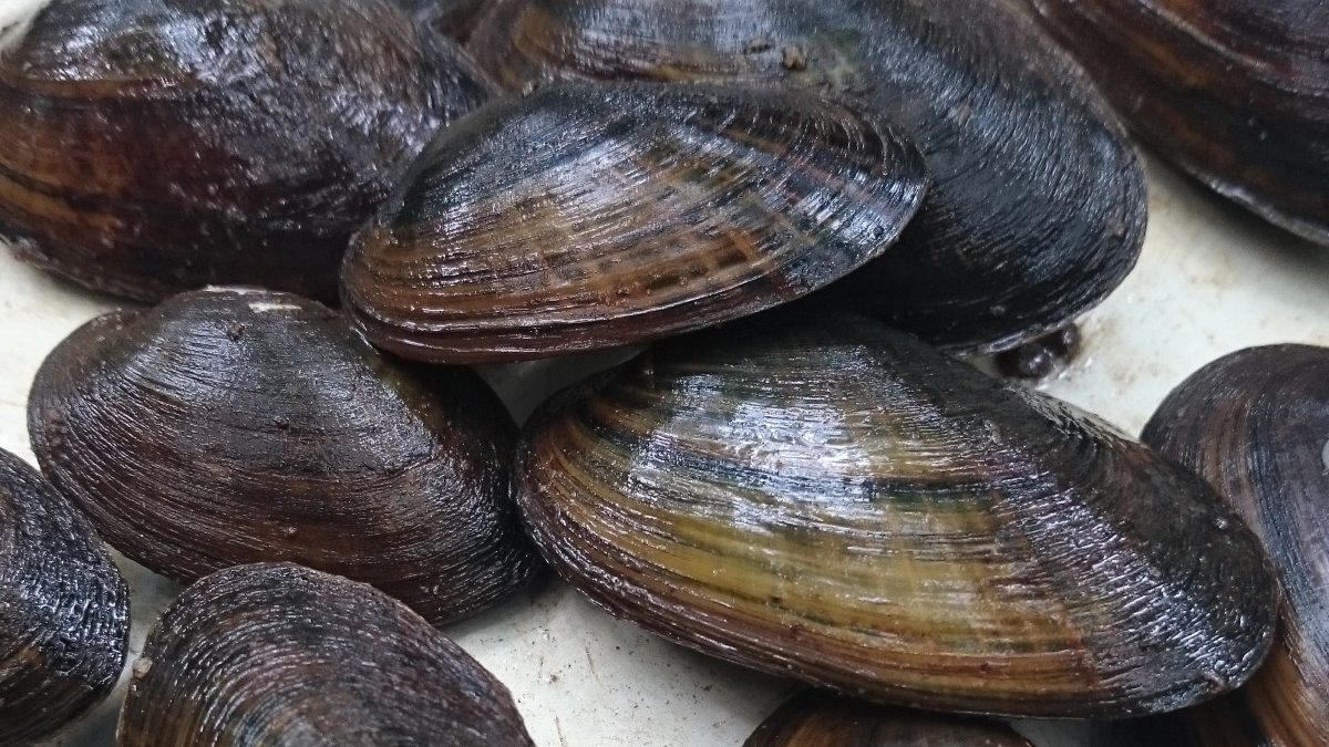 New Job Opens Eyes to Mussels