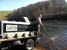 Trout stocking Buford Dam Andy W Dec 2017