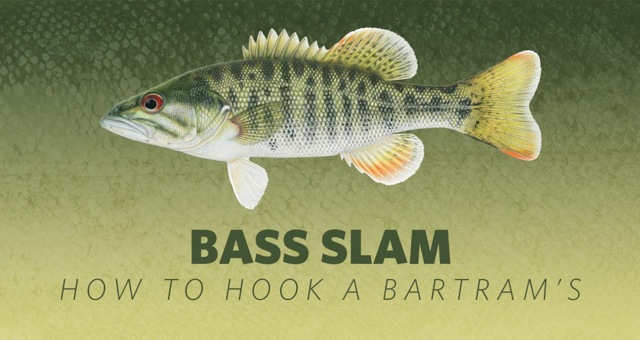 How to Hook A Bass Slam: Bartram's Bass