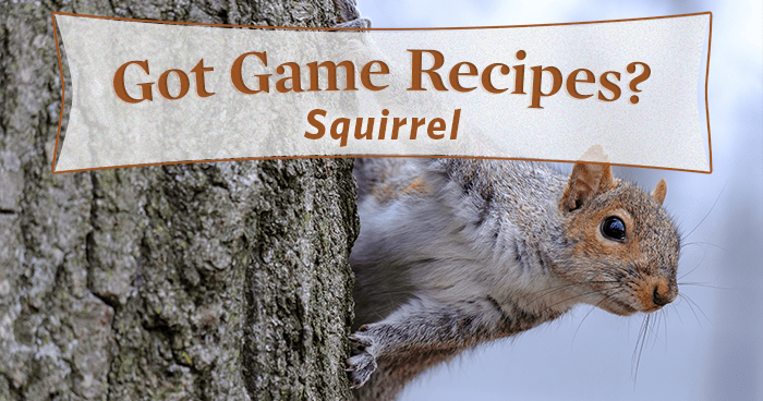 5 Best Squirrel Recipes You'll Ever Taste