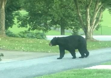 Bear Dillard 9-18-18