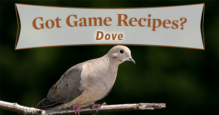 5 Dove Recipes You'll Love