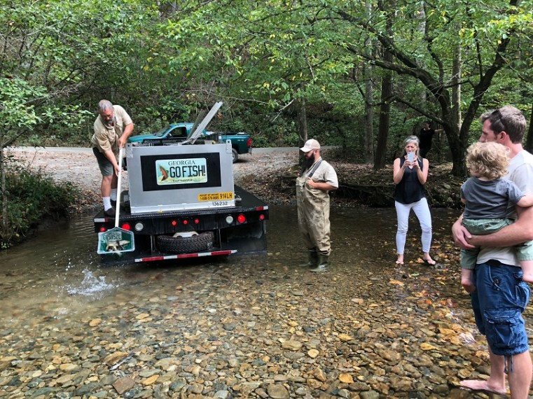 trout stocking Buford BNT into TR JeffS Oct2018
