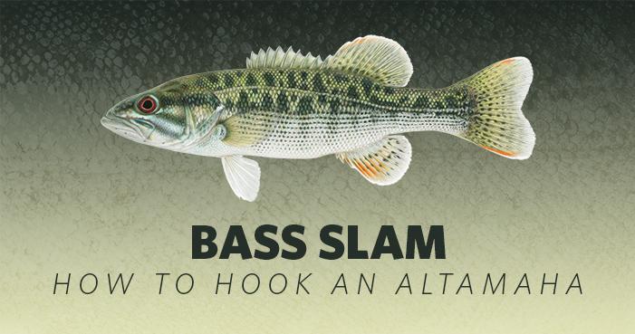 How to Hook An Bass Slam: Altamaha Bass