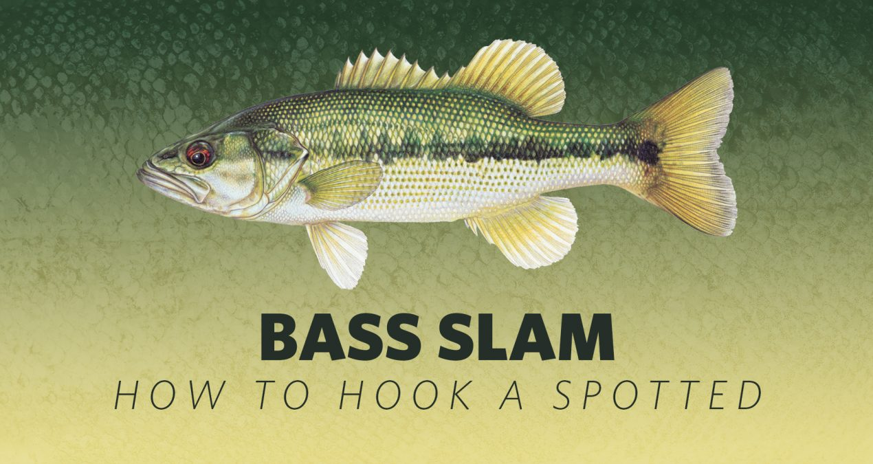 How to Hook A Bass Slam: Spotted Bass