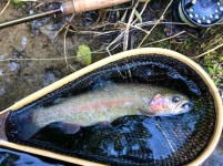 Rainbow Trout with eggs Chattooga DH 12-22-18
