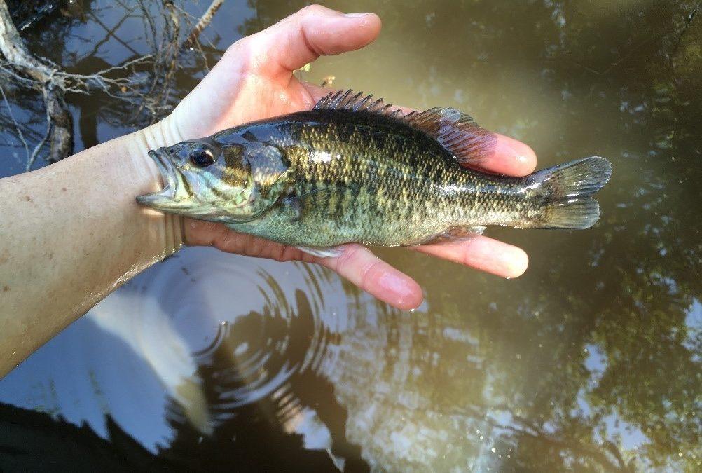 Georgia Fishing Report: April 26, 2019