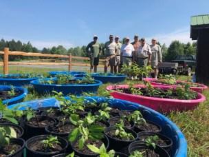 Aq Plants Arrowhead for toona pic2 June 2019