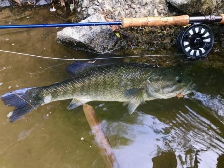 bass shoal 20in Hooch JD 6-2-19