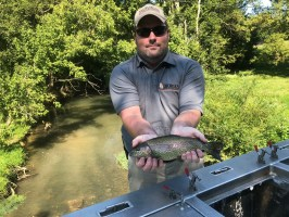 trout rbt stocker JoshT 8-29-18