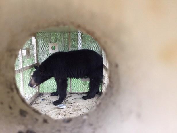 Buckhead Bear