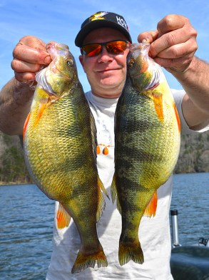 Angler David Starzec with some beautiful Perch!