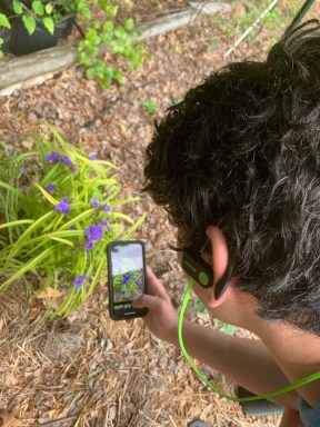 Jarrod Shulimson using iNaturalist