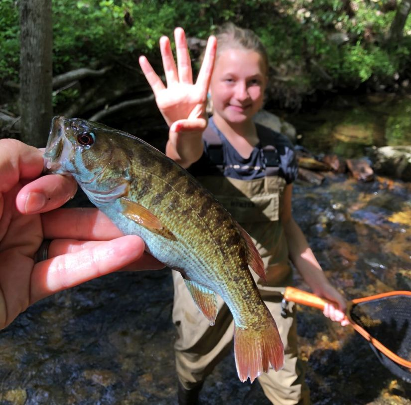 Fisheries Biologist John Damer and his oldest daughter had a successful day on a stocked stream, including this redeye bass catch