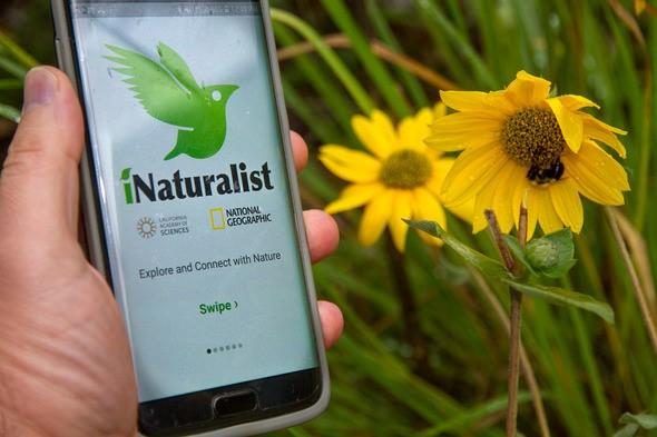 iNaturalist: A Conservation Community for All Ages