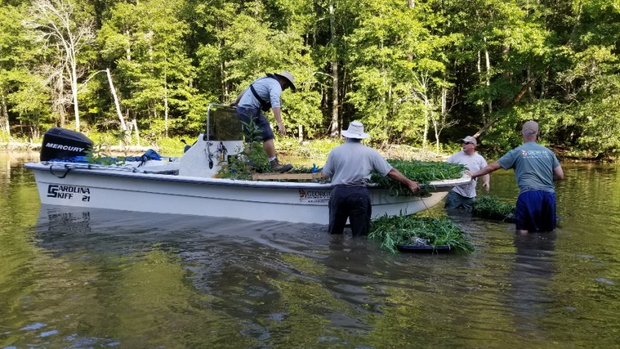 Water Willow and Buttonbush Plants Distributed at Don Carter State Park on Lake Lanier