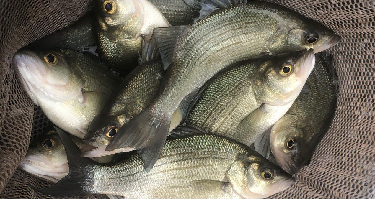 Georgia Fishing Report: March 26, 2021