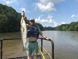 striper fish2 Morgan Falls TW shock June 2017 small