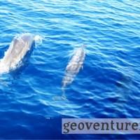 Dolphin watching at Puerto Princesa Bay