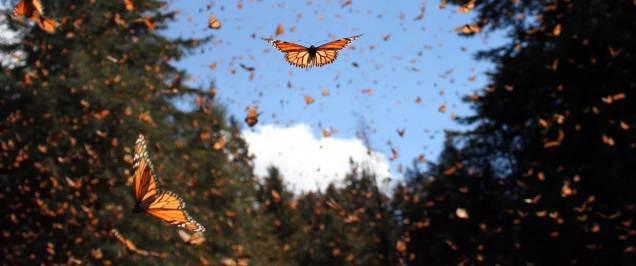 butterflygust3
