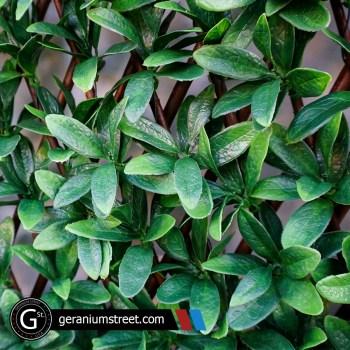 Artificial Green Trellis
