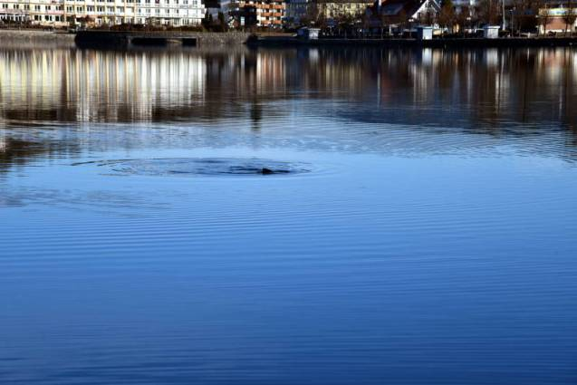 poisson lac Gérardmer (2)