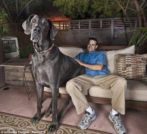Pour séduire, mieux vaut un chien qu'un iPad