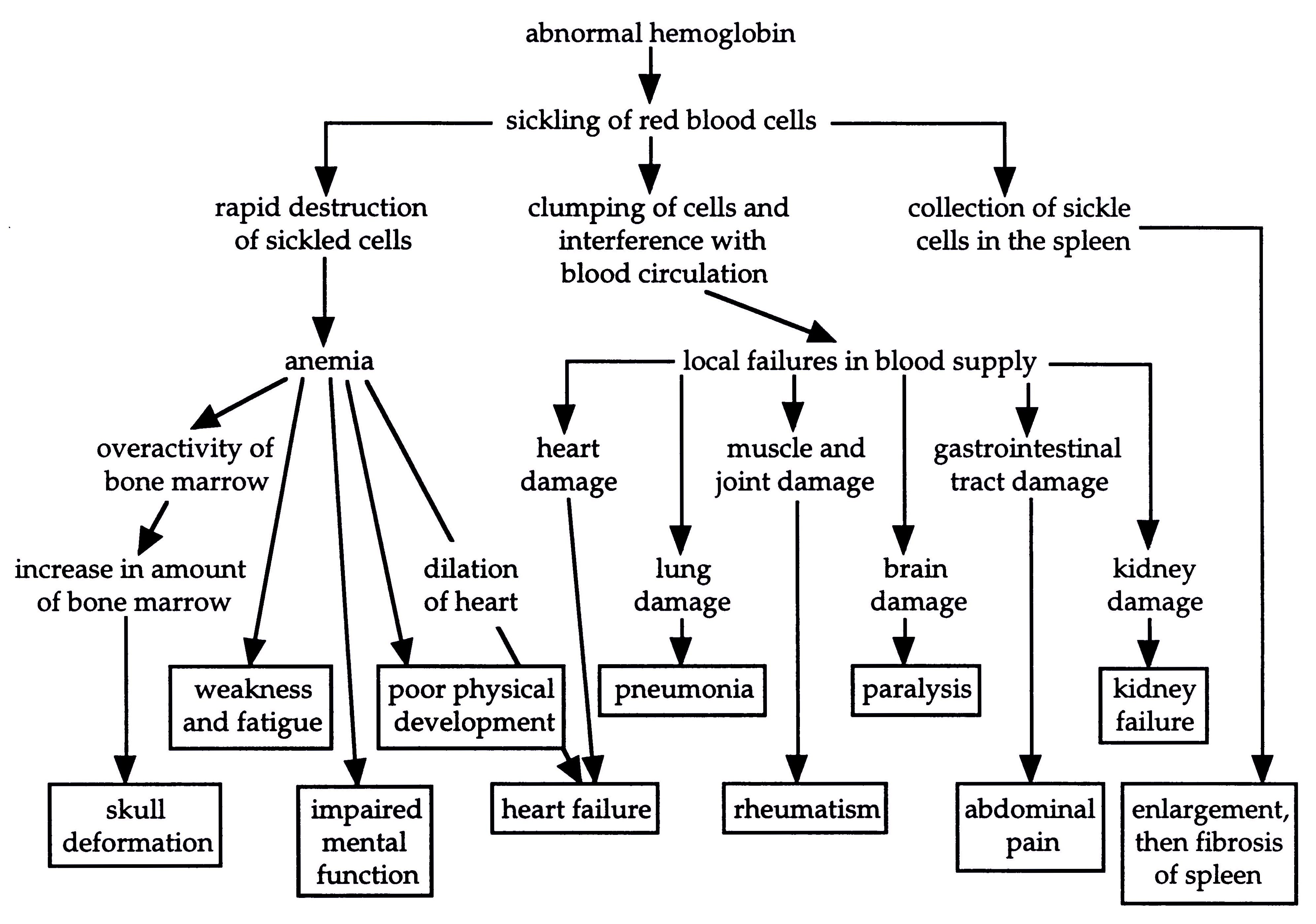 Sickle Cell Anemia Example Of A Beneficial Mutation