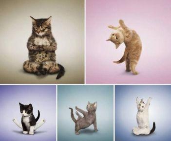 jógázó cicák