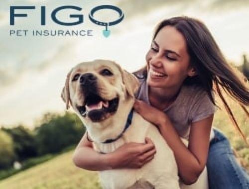 Car Insurance Harford County