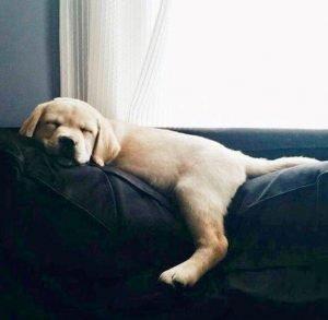 Guide to a Good Night's Sleep