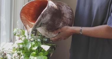 Eski piller bitkileri besleyecek