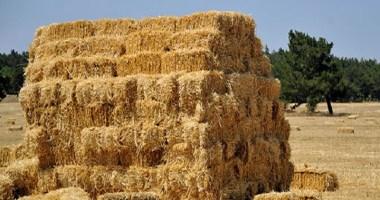 Buğday Samanından Tişört