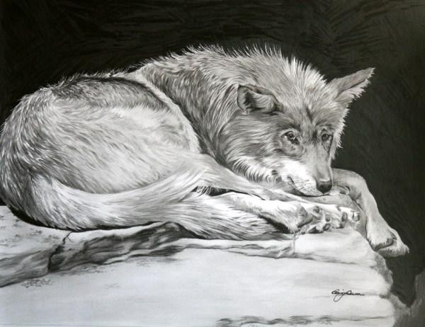 Wolf Drawings Defining West