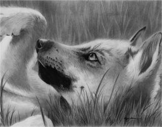 wolf drawings pups pup graphite tag play