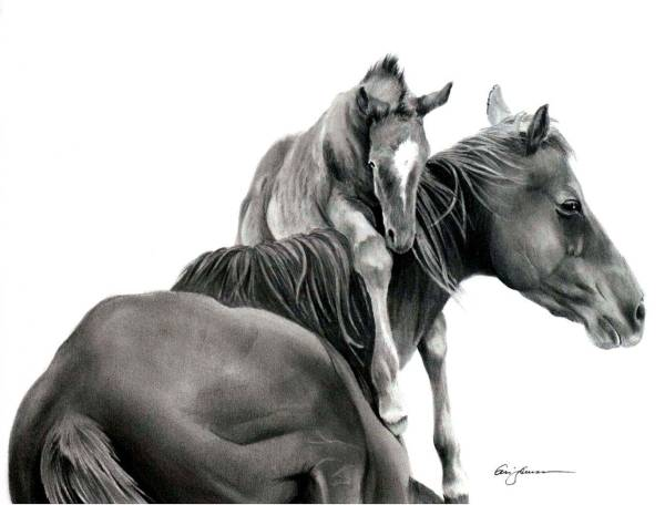 Pencil Drawing Of Horse Defining West